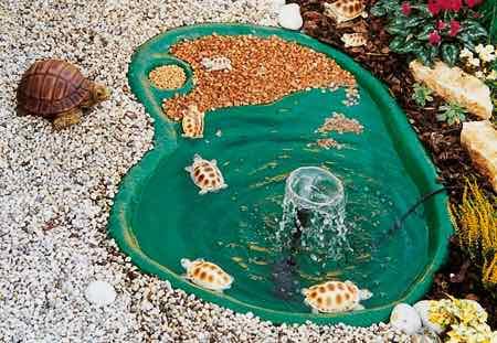 30 trionix big floricoltura fratelli sabbadini for Laghetti tartarughe acquatiche
